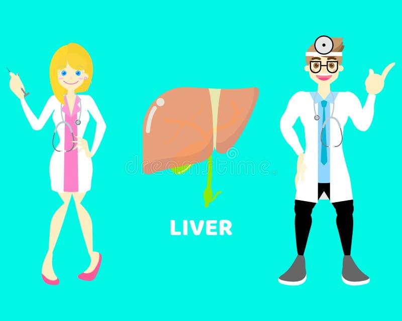 Varón y doctor de sexo femenino con el hígado, sistema nervioso de la parte del cuerpo de la anatomía de los órganos internos fotos de archivo