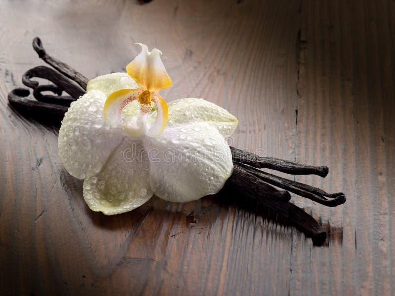 Vara da baunilha com orquídea fotografia de stock royalty free