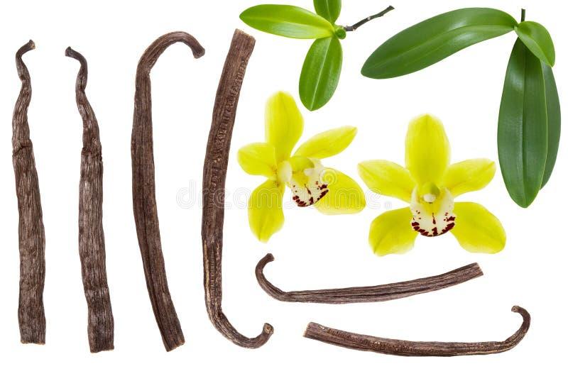 A vara da vagem da baunilha e a flor amarela com folha verde ajustaram-se ou coleção isolada no fundo branco Vista superior Confi imagem de stock