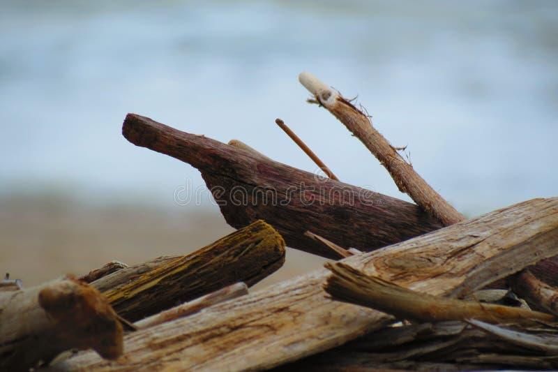 Vara de madeira velha na costa de mar imagem de stock