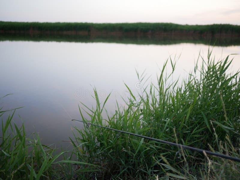 Vara de pesca no banco de rio entre a vegetação verde imagem de stock royalty free