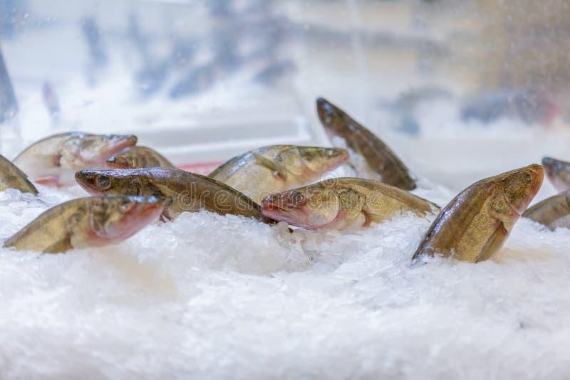 vara de pique no gelo na loja fotografia de stock