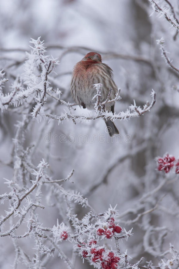 Vara do inverno II fotografia de stock