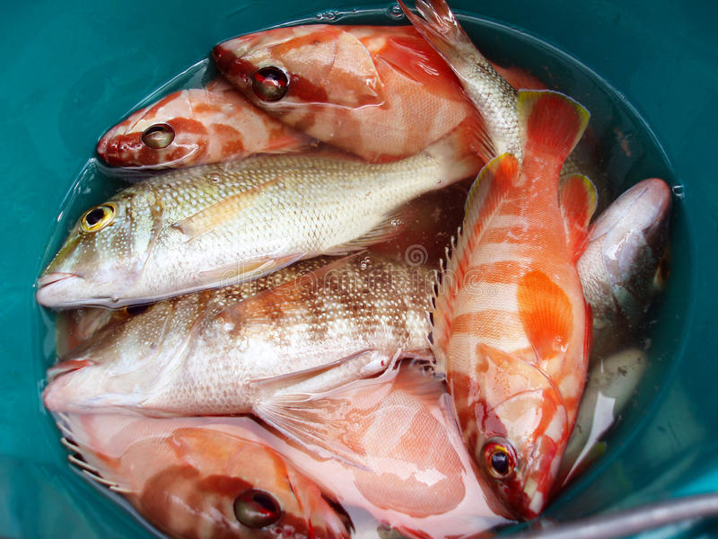 Vara do Mar Vermelho fotos de stock