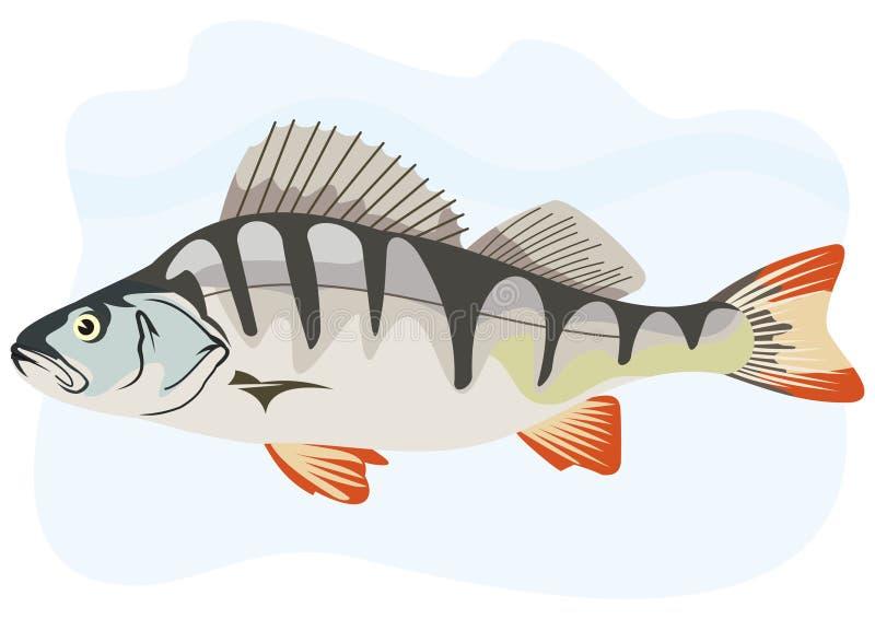 Vara européia dos peixes ilustração do vetor