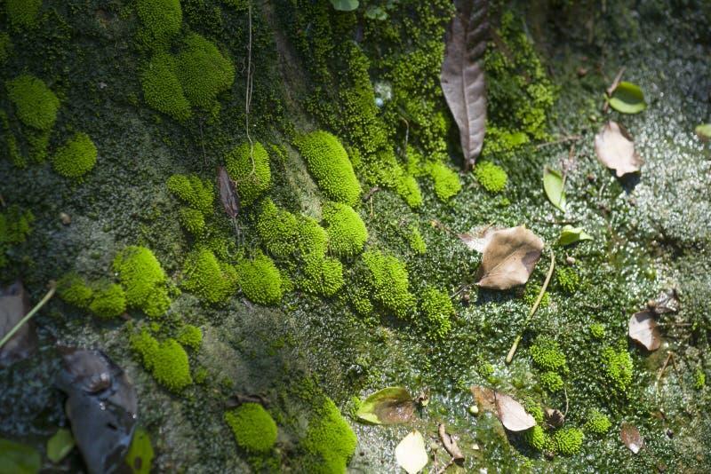 Vara skyldig till den fuktiga miljön och det överflödande vattnet, fylls ingången till våren med mossa och klungor av microflorae royaltyfria foton