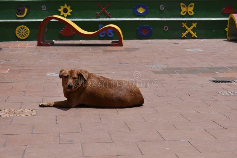 Vara slö hunden i plazaen i middagsol arkivbilder