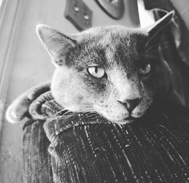 Vara slö katten på en soffa royaltyfri fotografi