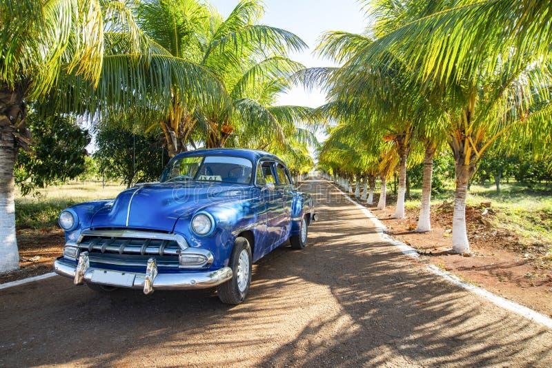 Varadero, Cuba, Amerikaanse blauwe klassieke auto op steeg met groene palmen, beschikbare ruimte voor tekst stock afbeeldingen
