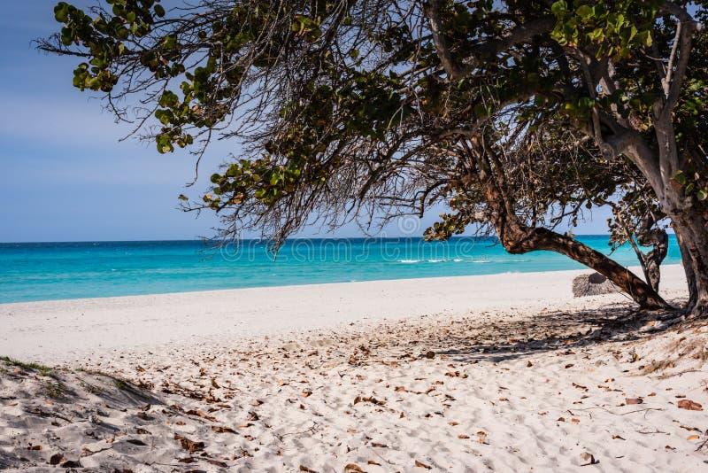 Path to Varadero Beach. Varadero, Cuba / March 17, 2016: Tree lined path to Varadero Beach royalty free stock photo