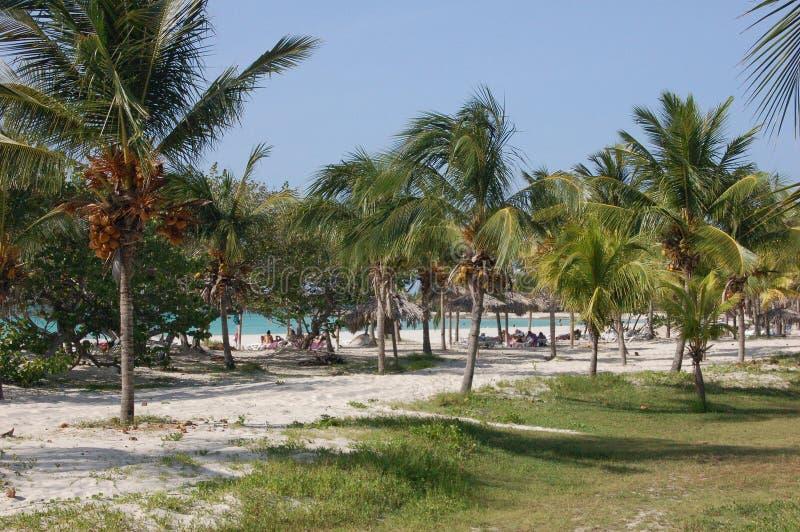 Varadero Palm Beach stock foto