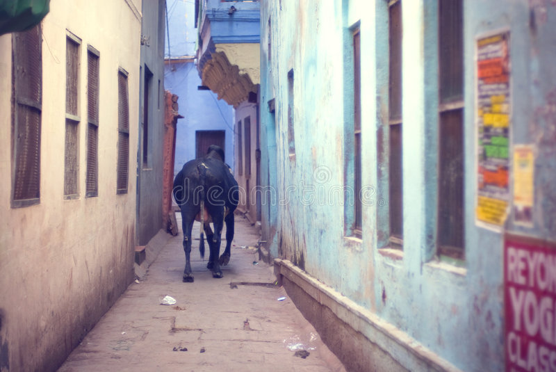 Varanasi-Gasse stockfotos