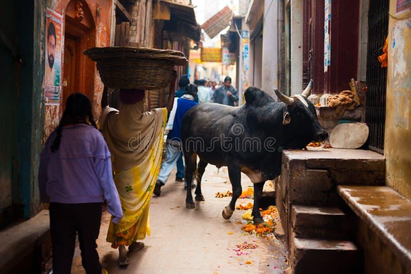 Schwarze Stier-Kuh, die schmale Gasse Varanasi blockiert stockfotografie