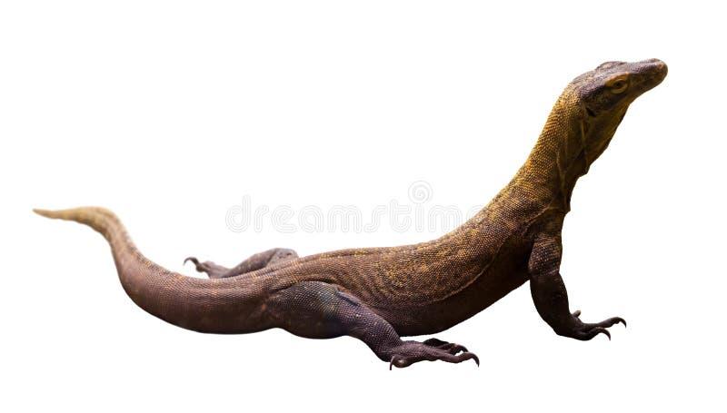 varanus komodoensis komodo дракона стоковое изображение rf