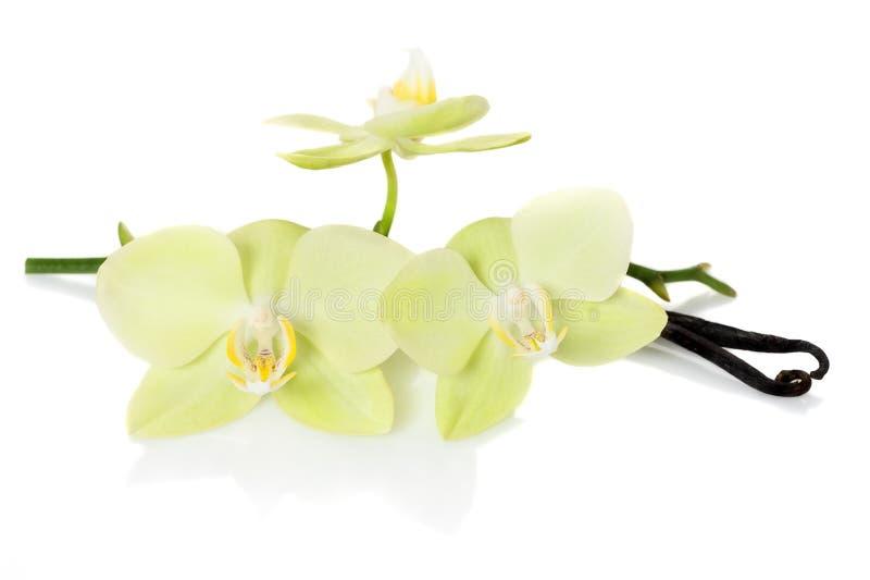 Vagens da baunilha e orquídeas das flores fotos de stock royalty free