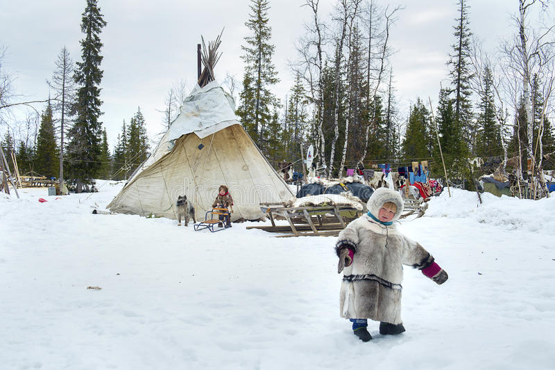 Vardagsliv av ryska infödda renherders i arktisken arkivbilder