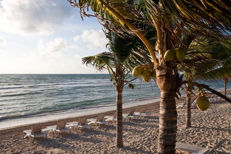 vardagsrumar för strandchaisekokosnöt gömma i handflatan fotografering för bildbyråer