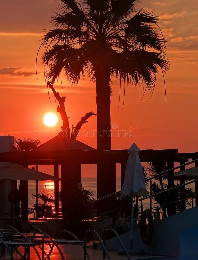 Vare con la palmera en el fondo rojo del sol poniente fotos de archivo libres de regalías
