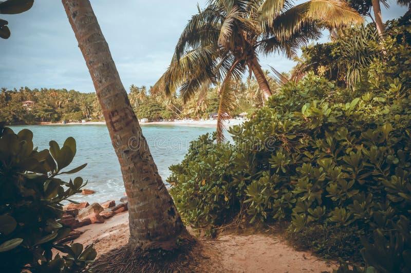 Vare con las palmeras del Océano Índico y del bosque alrededor Paisaje tropical de Asia del Sur foto de archivo libre de regalías