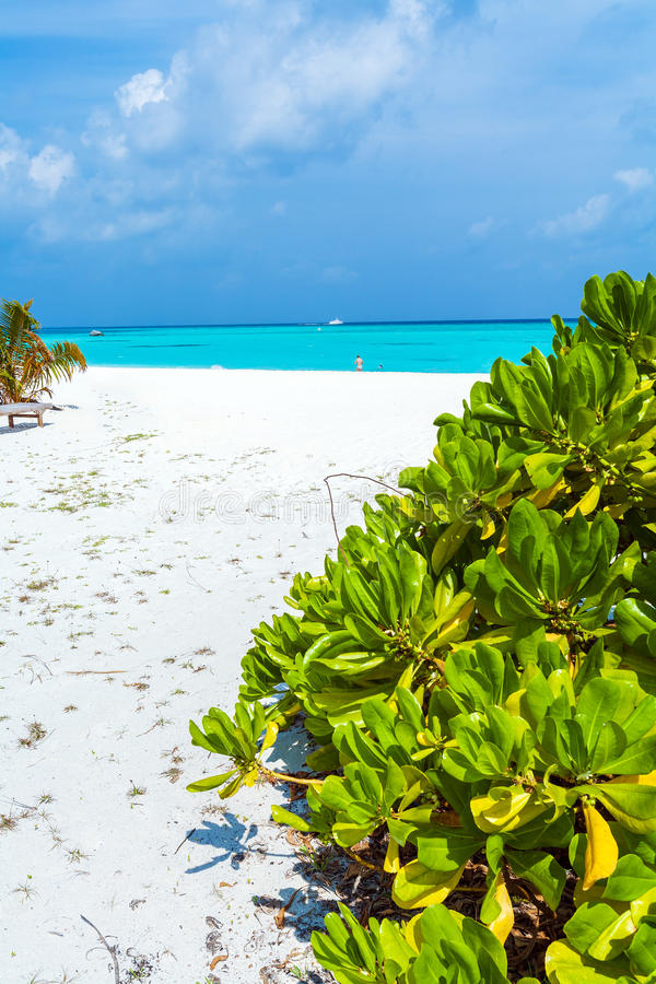 Vare, crecido demasiado con los árboles y los arbustos, Maldivas fotografía de archivo