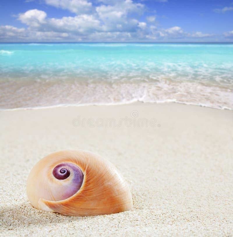 Vare la macro blanca tropical del primer de la arena del caracol de mar fotografía de archivo