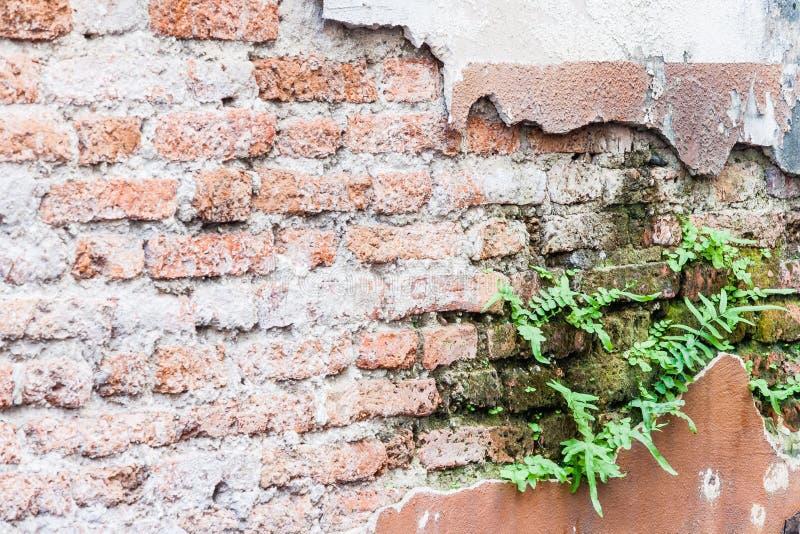Varen die op bakstenen muur leven royalty-vrije stock fotografie