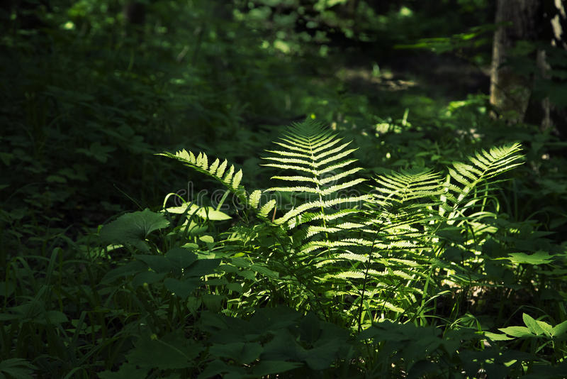 Varen in een donker bos stock foto's