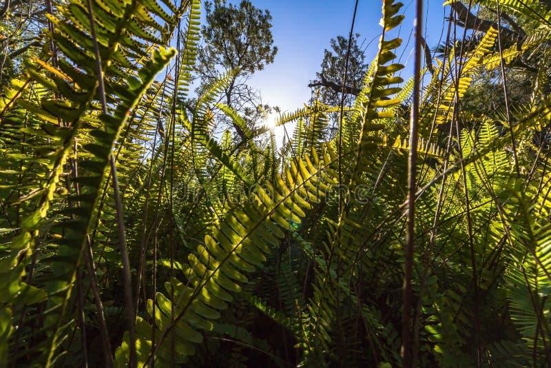 Varenbladeren in Australië stock foto