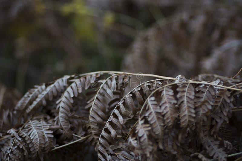 Varenbladeren in de herfst royalty-vrije stock afbeeldingen