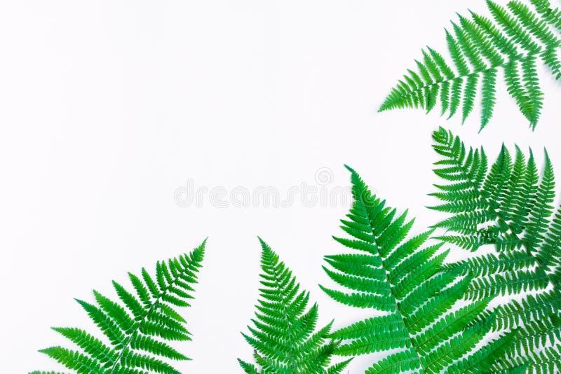 Varenbladeren die op witte achtergrond worden geïsoleerd Vlak leg, hoogste mening royalty-vrije stock foto