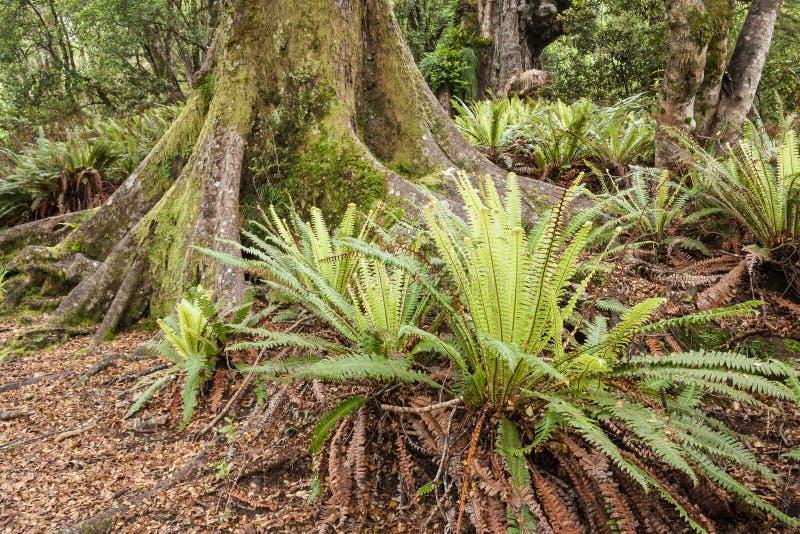 Download Varens die in bos groeien stock afbeelding. Afbeelding bestaande uit gebladerte - 54089875