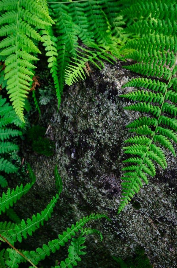 Varenvarenbladen die granietrots behandelen royalty-vrije stock afbeeldingen