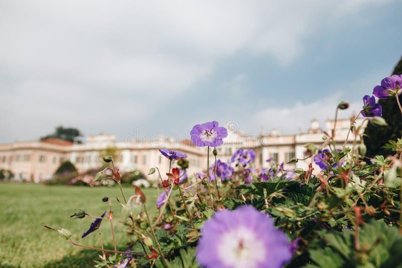 Varese OUTUBRO DE 2018 ITÁLIA - flores contra o palácio de Estense, ou Palazzo Estense fotos de stock royalty free