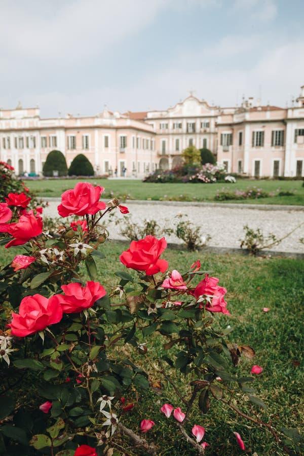 Varese OUTUBRO DE 2018 ITÁLIA - flores contra o palácio de Estense, ou Palazzo Estense foto de stock