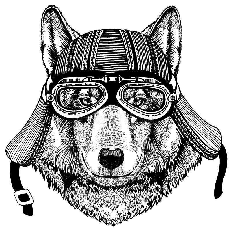 Varg för löst hjälm för motorcykel cyklistdjur för hund bärande r vektor illustrationer