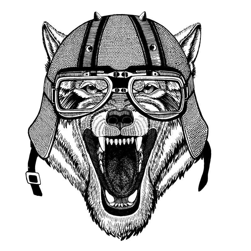 Varg hund som bär en motorcykel, aero hjälm Utdragen bild för hand för tatueringen, t-skjorta, emblem, emblem, logo, lapp royaltyfri illustrationer