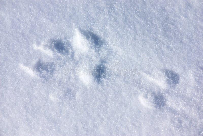 Vargspår i snö royaltyfri fotografi