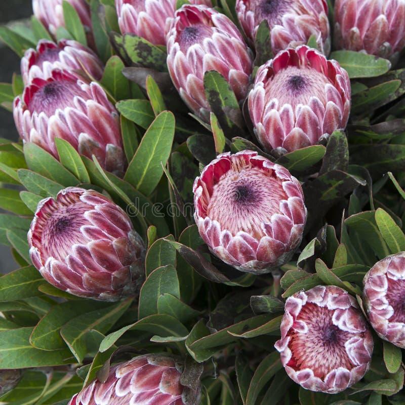 Download Variété colorée de fleurs photo stock. Image du individualité - 45359432