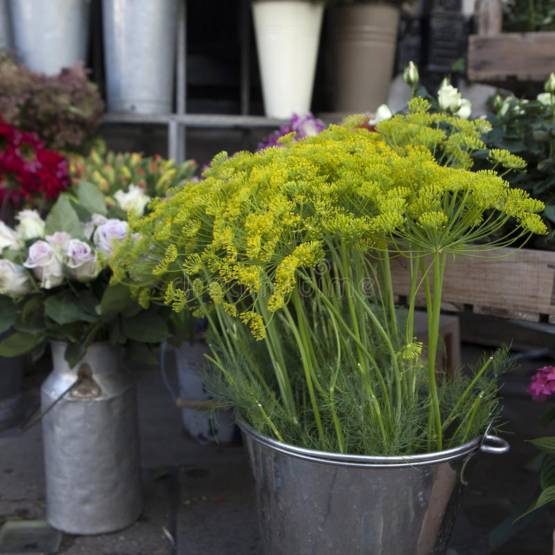 Download Variété colorée de fleurs image stock. Image du petit - 45360139