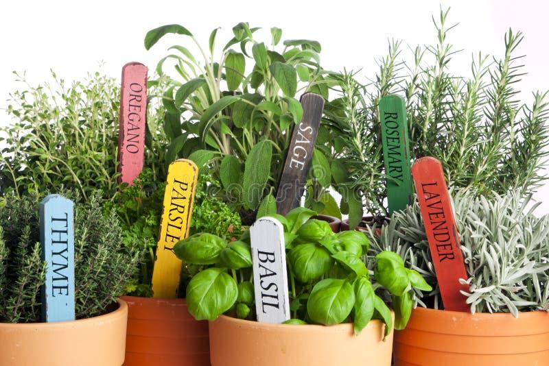 Variété d'herbes mises en pot de jardin, plan rapproché photographie stock libre de droits