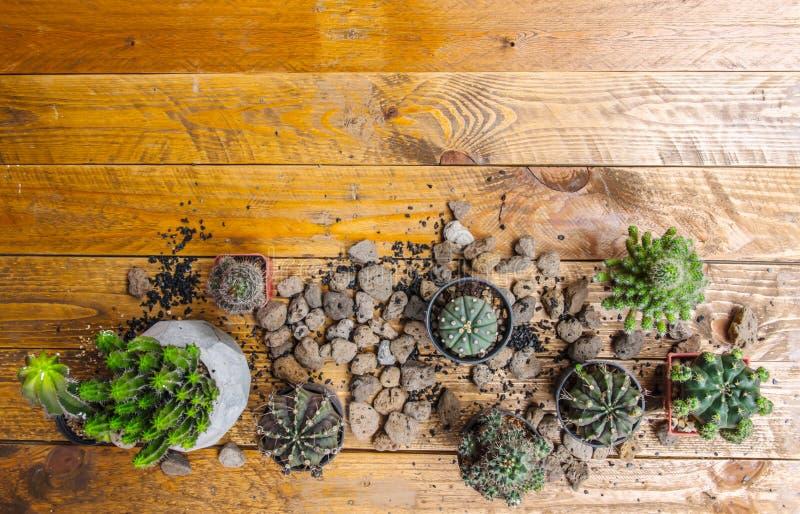 Variété de cactus sur le plancher en bois photographie stock libre de droits