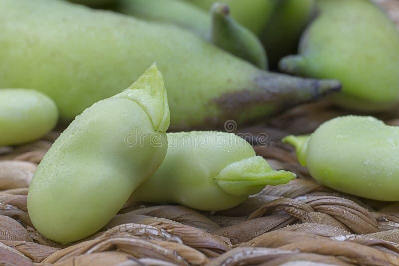 Variété de faba de vicia de fèves commandant en cosses et graines photographie stock libre de droits