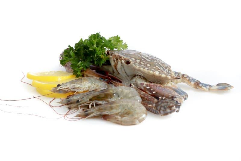 Variété de fruits de mer frais photographie stock libre de droits