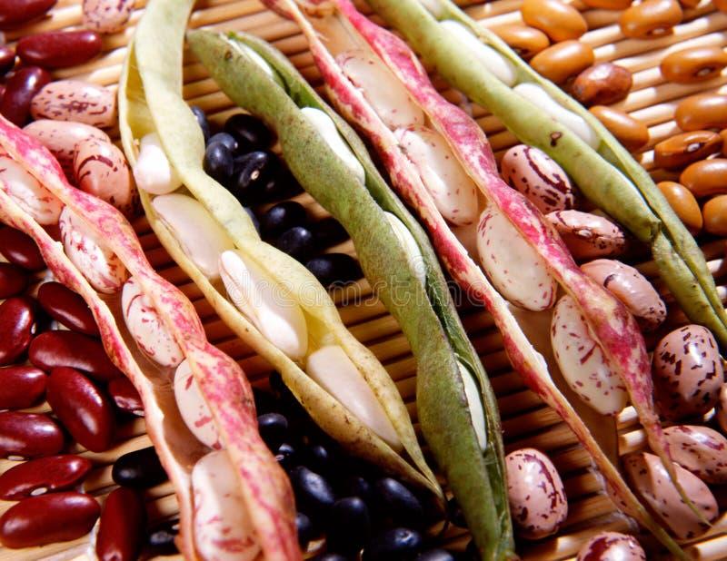 Variété de haricots secs photographie stock libre de droits