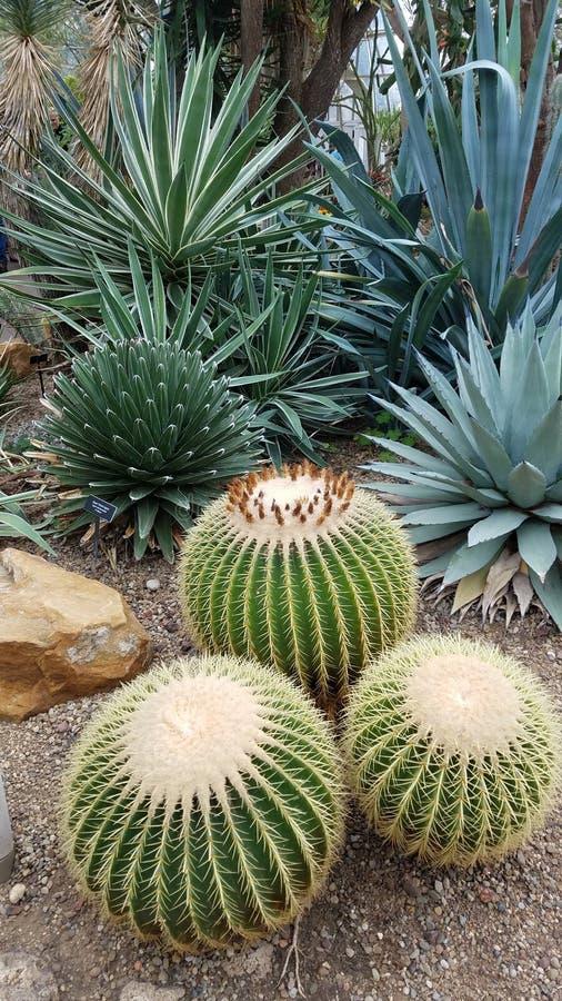 Variété de succulents épineux dans un jardin photographie stock