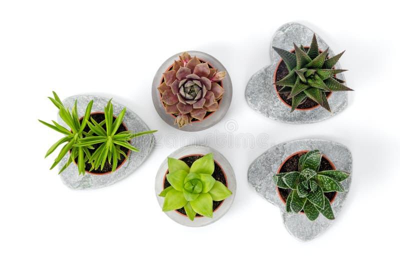 Variété de succulents dans les planteurs concrets photo stock