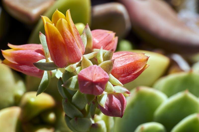 Variété de succulents dans un environnement sécheresse-tolérant photo stock