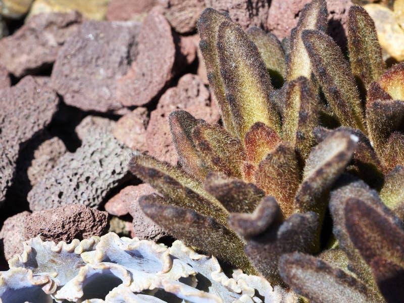 Variété de succulents dans un environnement sécheresse-tolérant photographie stock
