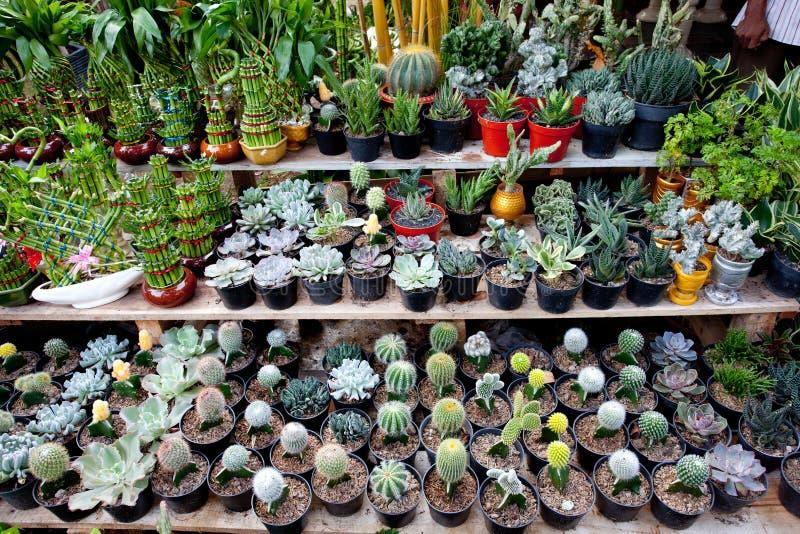 Variété Mini Plant photographie stock libre de droits