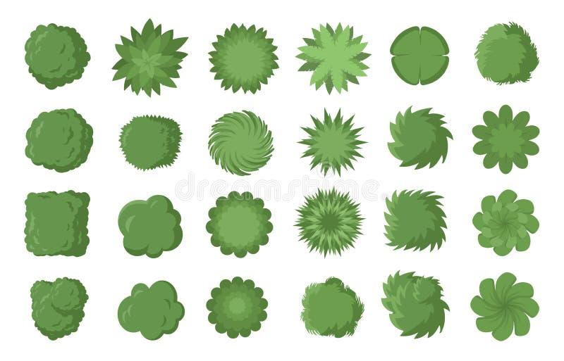Vari alberi, cespugli ed arbusti, vista superiore per il piano di sviluppo del paesaggio Illustrazione di vettore, isolata su fon illustrazione vettoriale